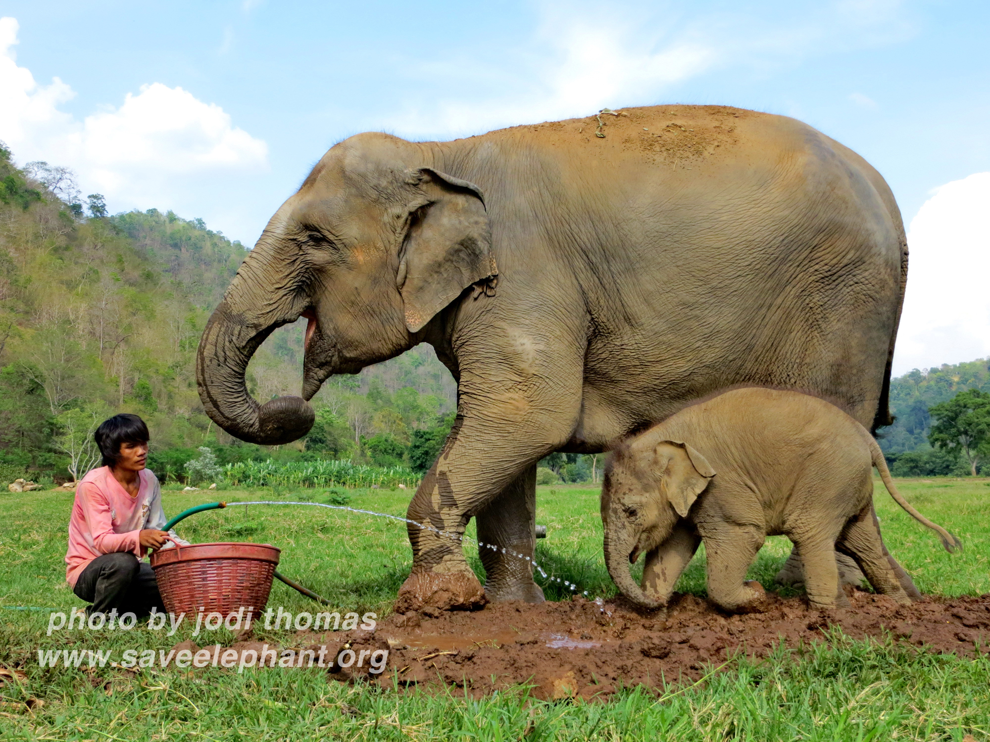 baby elephant photos   save elephant foundationbaby elephant dok mai at enp