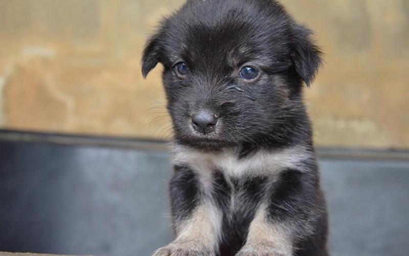 Dog Rescue Puppy 1