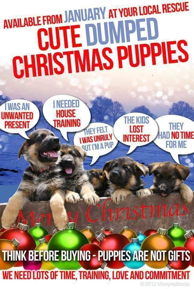 Please don\'t buy puppies for Christmas - Dog Project - Elephant ...