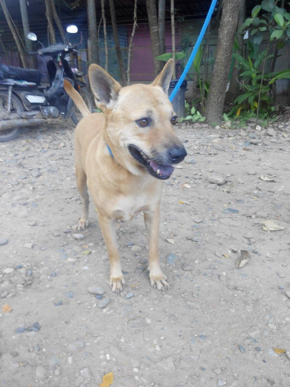 Toto – PRIORITY DOG UP FOR ADOPTION