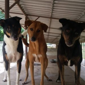 These Three Sisters Are Looking For A Home