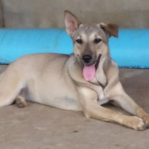 Lima Is Looking For A Home