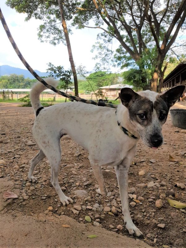 Available for Adoption - Dog Project - Elephant Nature Park