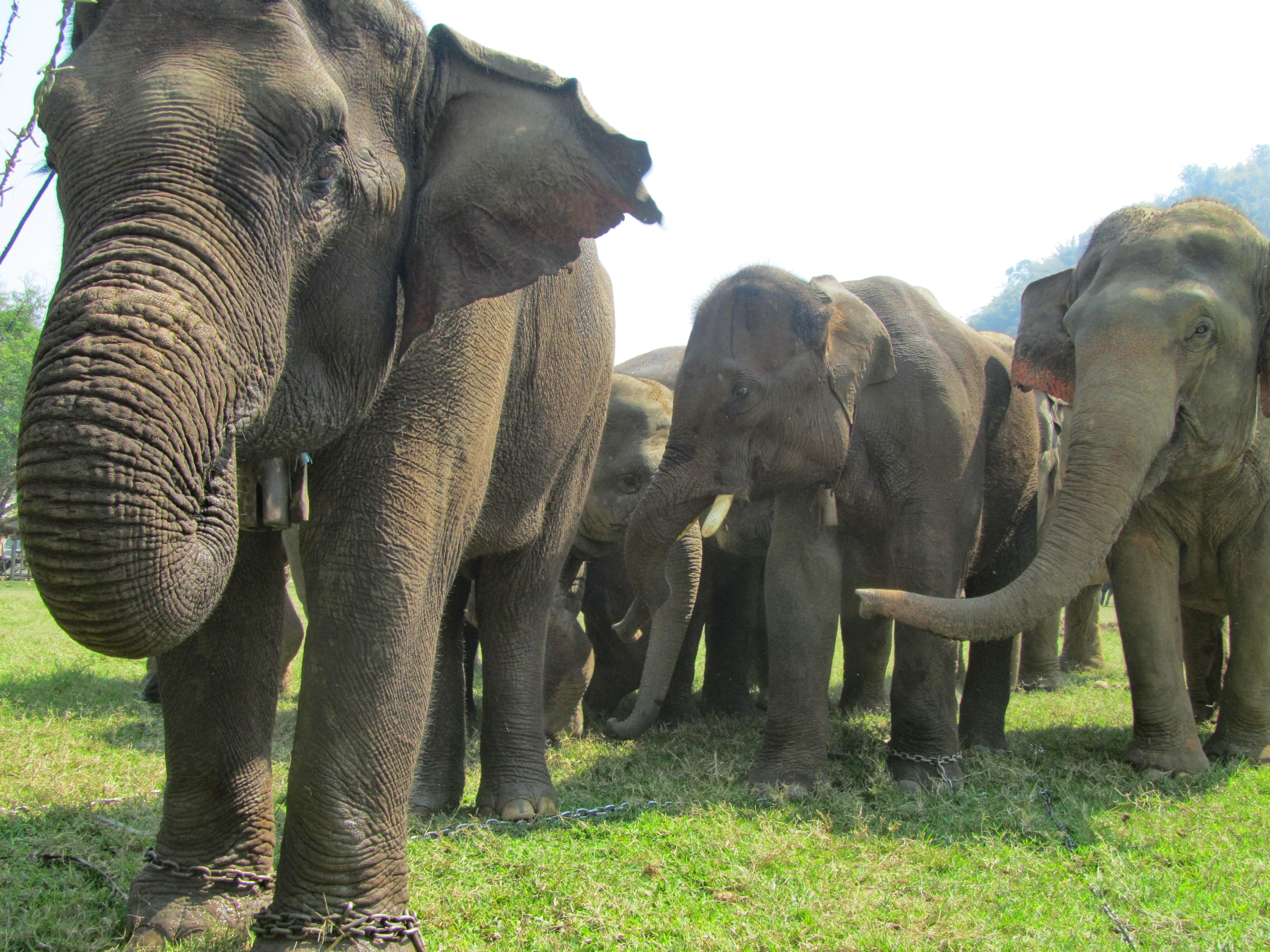 Elephant Nature Park  Blog  Save Elephant Foundation