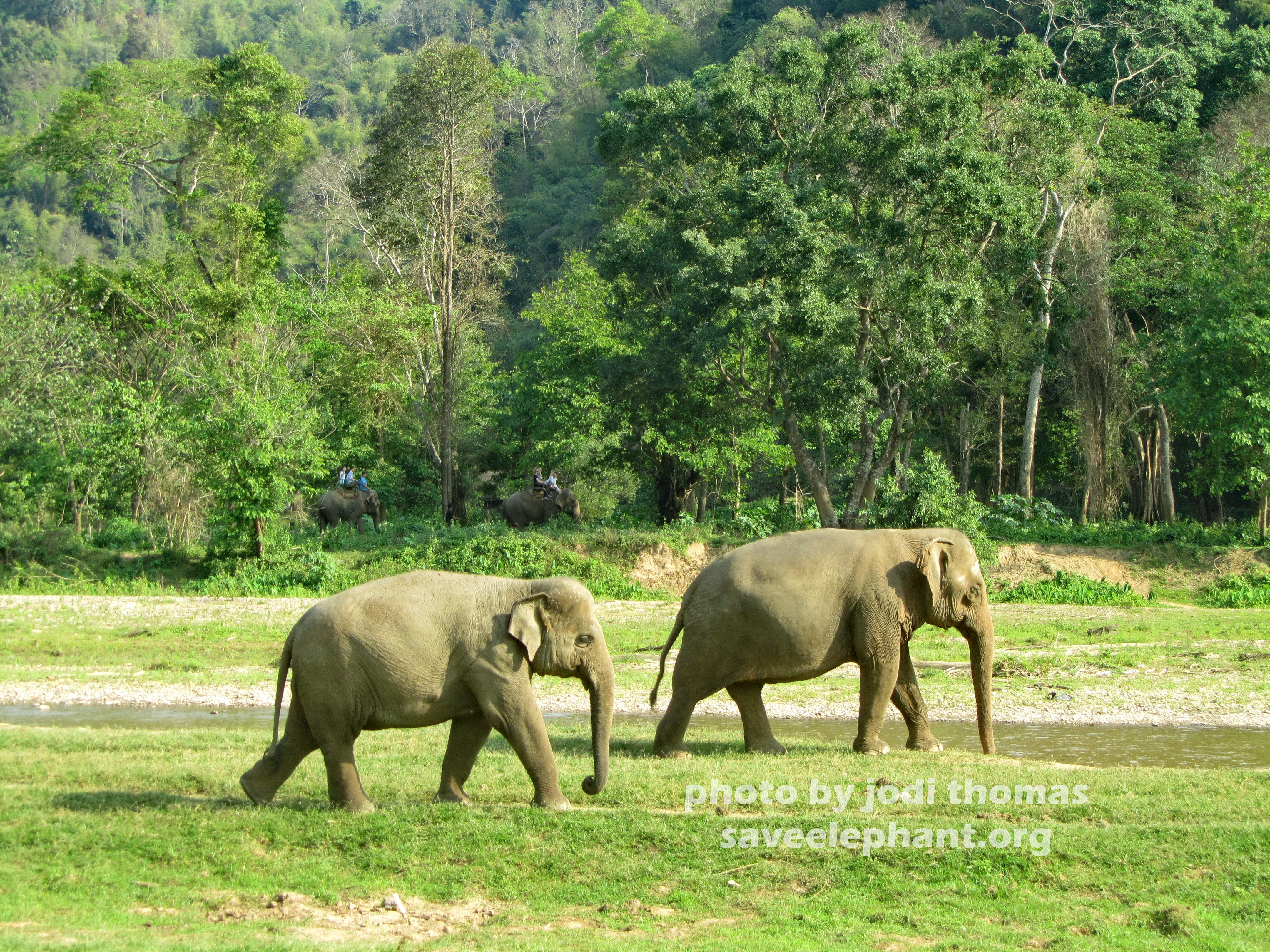 Elephant Nature Park Dog Rescue Project