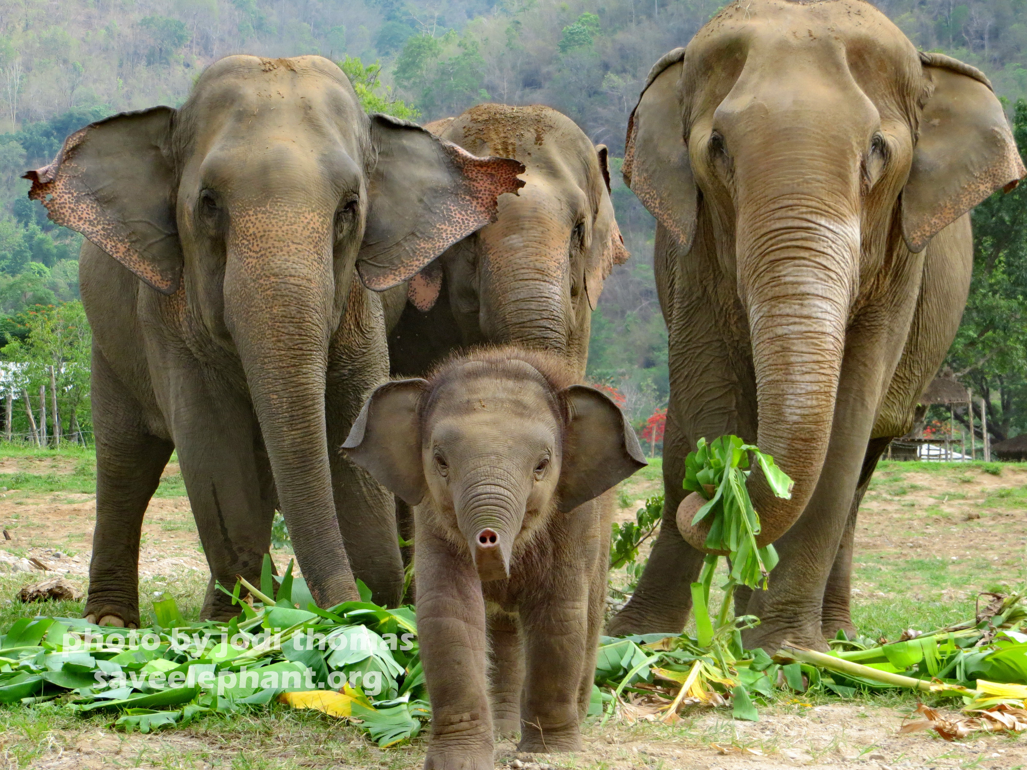 elephant attractions archives page of save elephant baby elephant navann a photo essay
