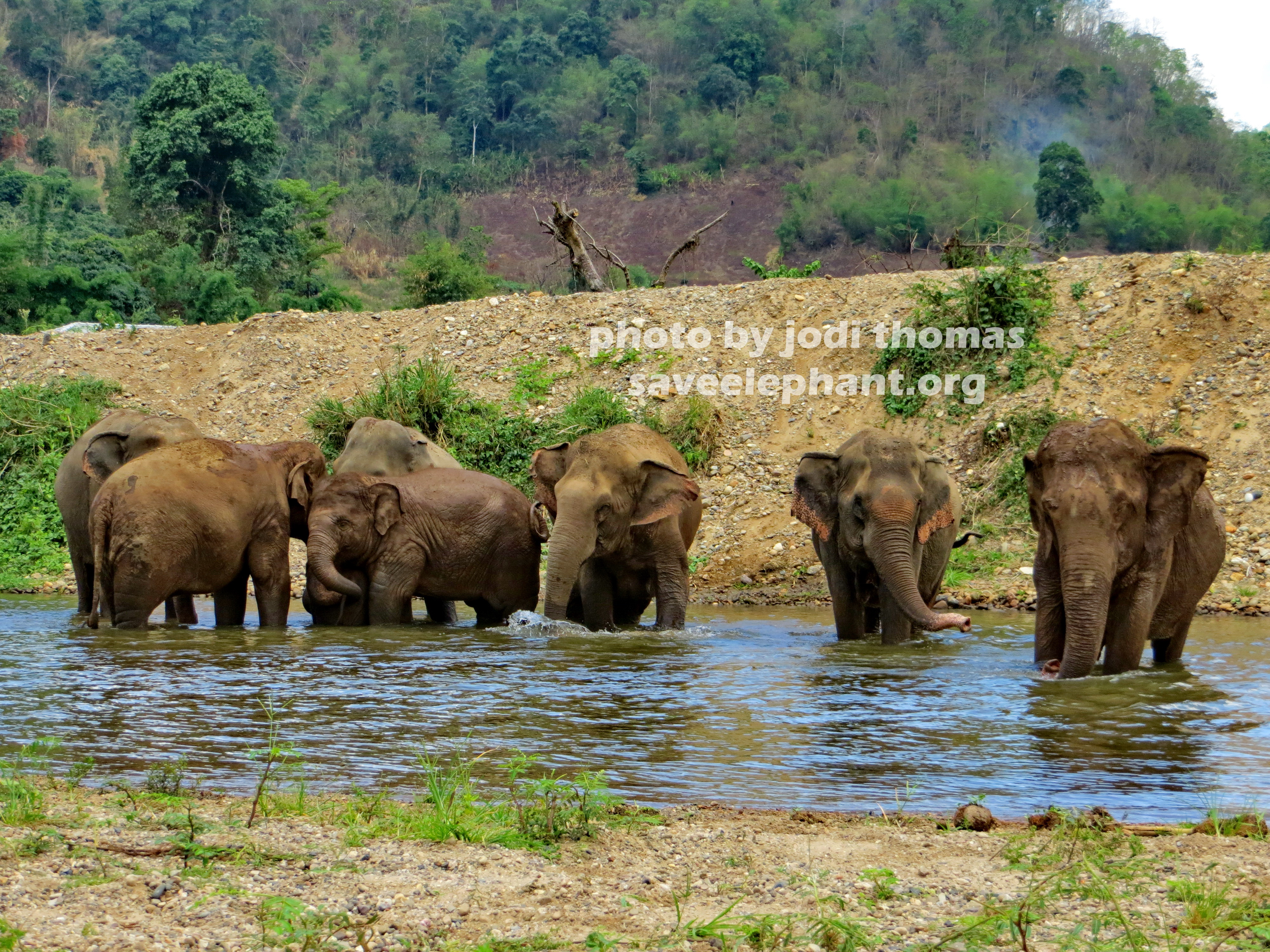 Baby Elephant Navanns New Nanny  Save Elephant Foundation