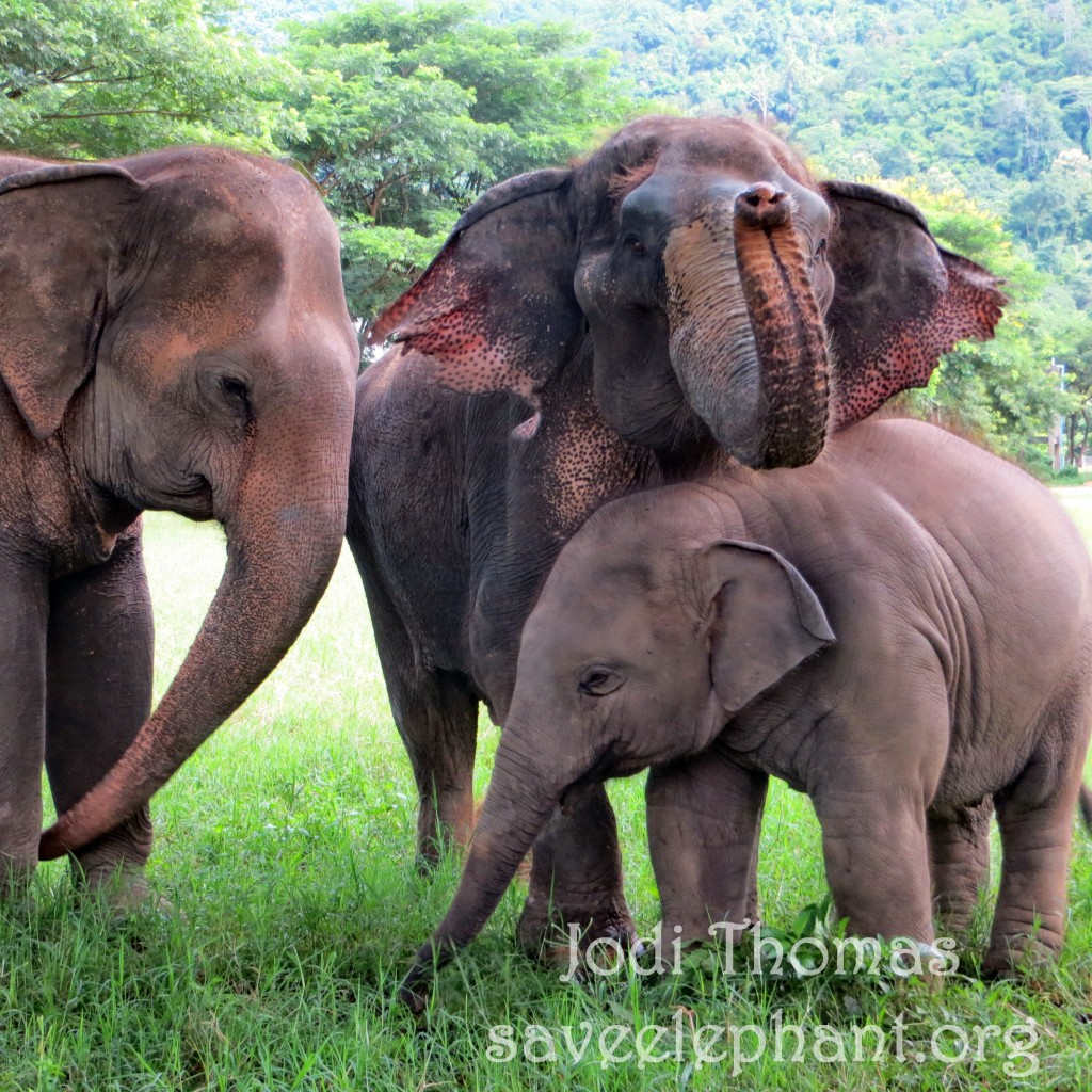 essay saving wild animals Advantages of wildlife conservation wildlife conservation is the mode of protecting endangered animals and plant species and their habitats wildlife conservation also ensures that the future generations can enjoy and recognize the importance of wildlife and lands of wilderness.