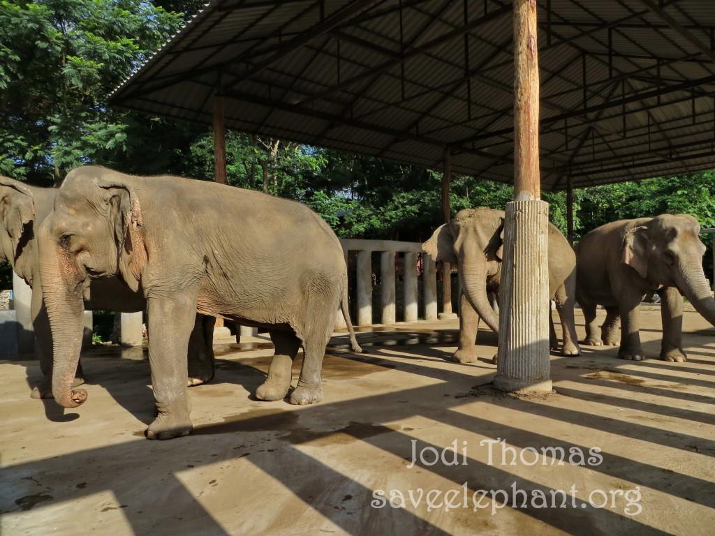 Elephant Nature Park Dog Rescue Review
