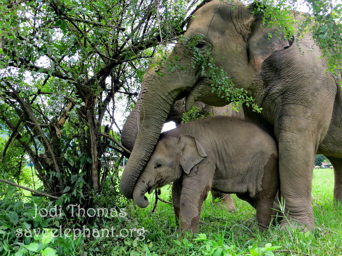 Elephants just being elephants - it just doesn't get any better.