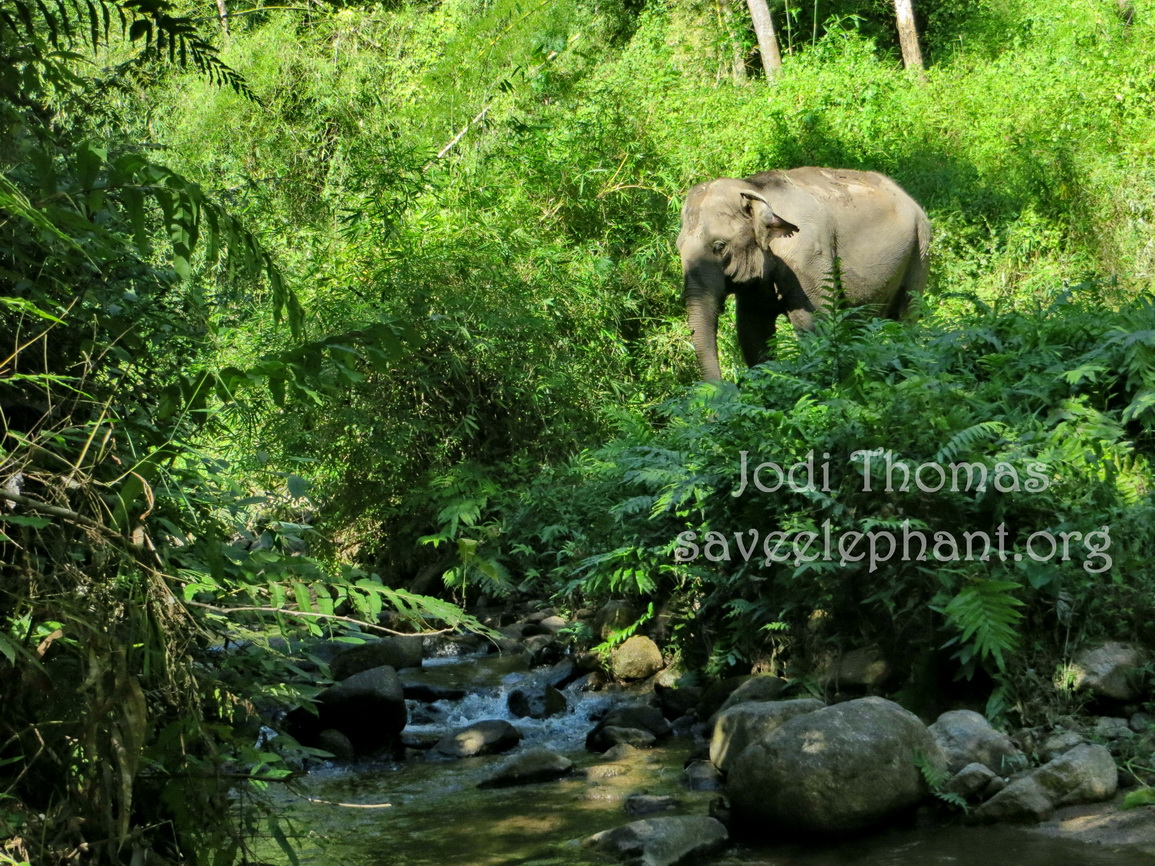 On SEF's 'walking with elephants' tours, you may capture beautiful moments like this.