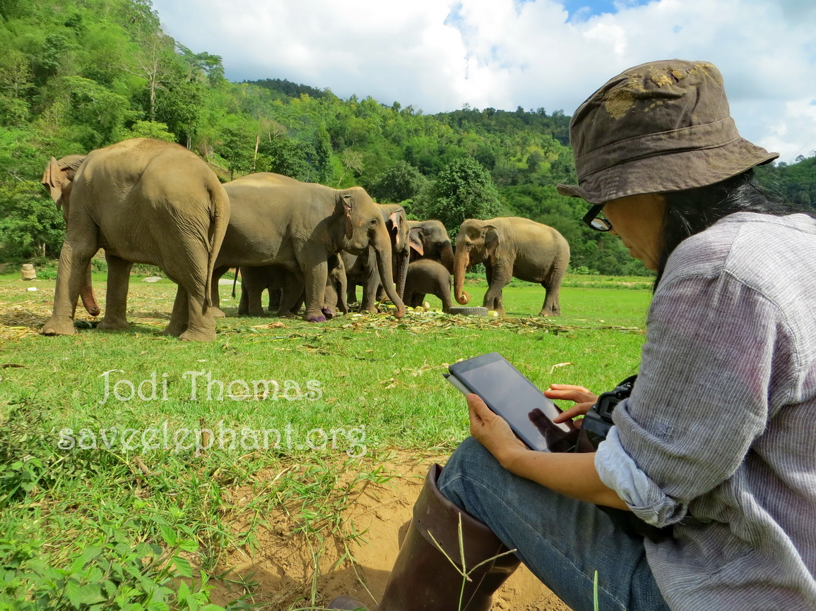 Lek works hard every day, spreading the word, creating awareness, hoping to make a future of freedom for all elephants a REALITY.