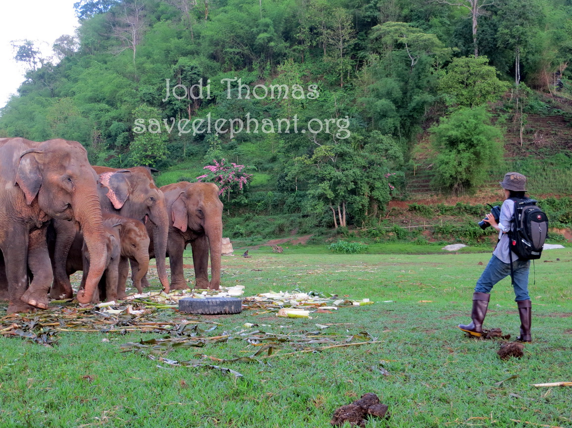 Lek's vision has became a reality. Letting elephants just BE elephants is catching on!