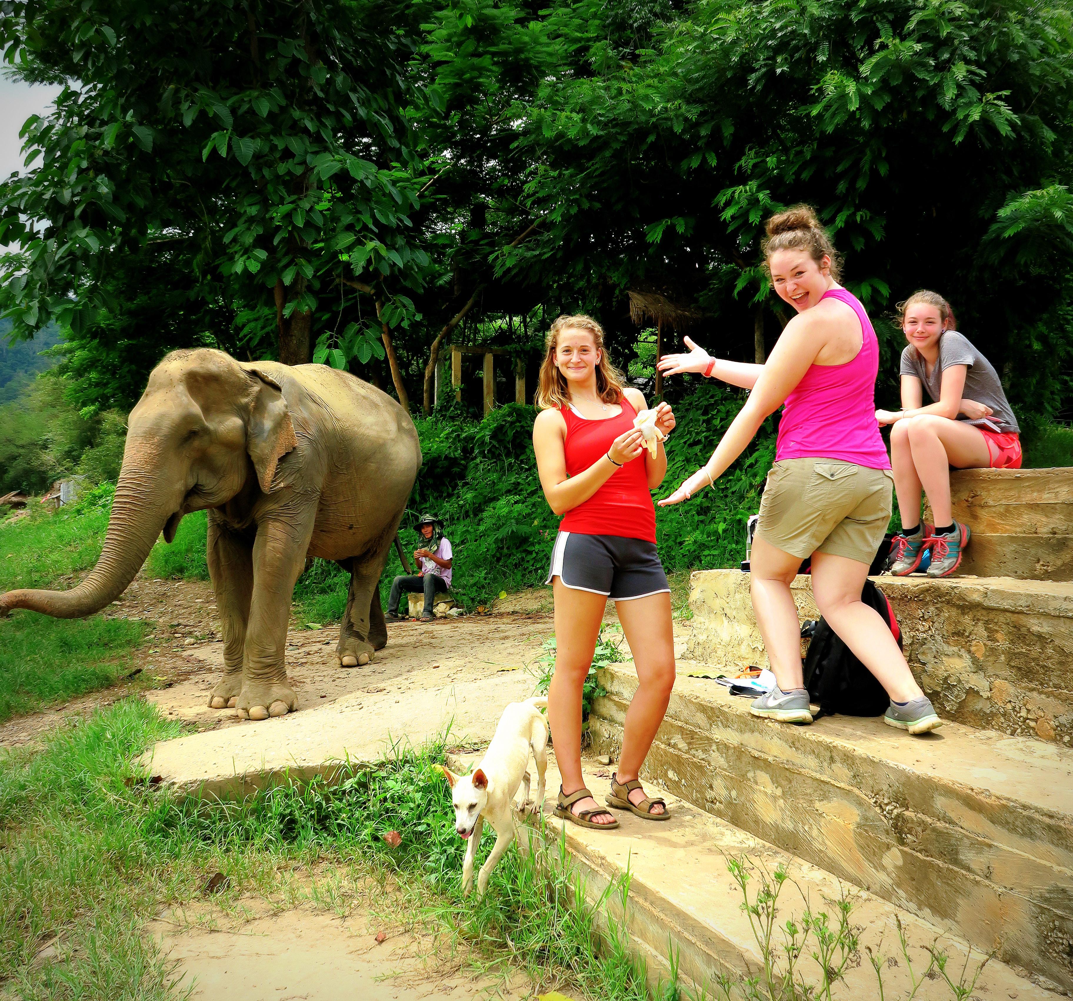 Loop Abroad Student Volunteers at Elephant Nature Park