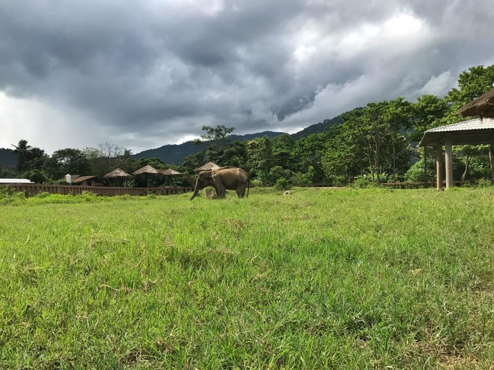 Surin Elephant Nature Park